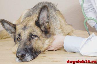 фосфалюгель для собак