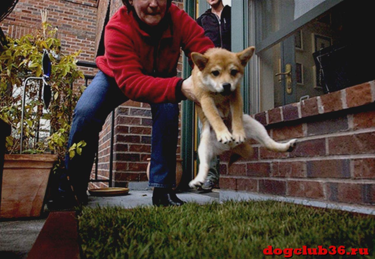 приучение щенка к туалету на улице