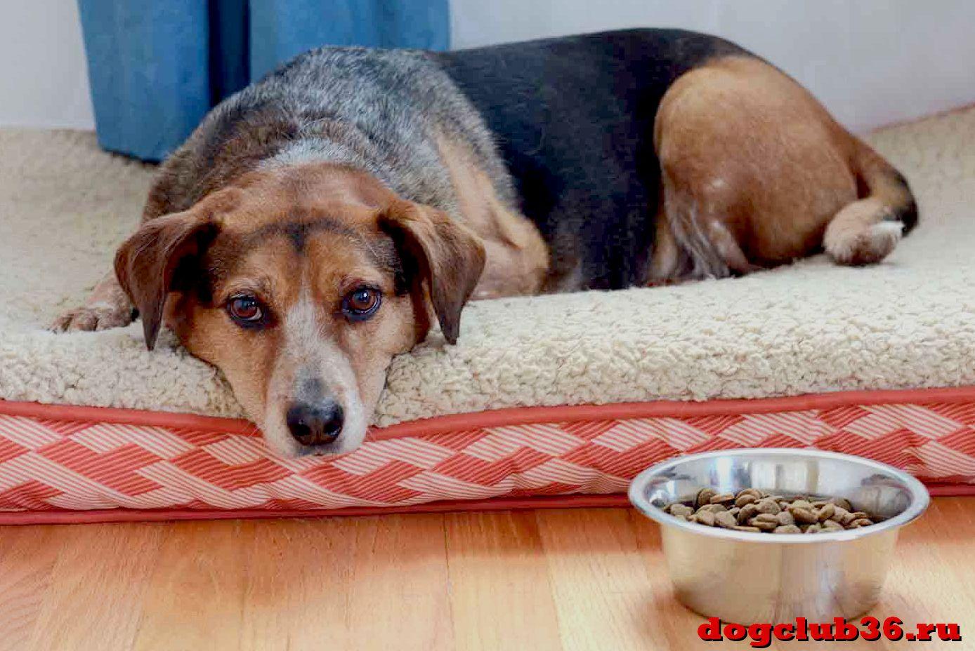 Почему собака перестала есть еду