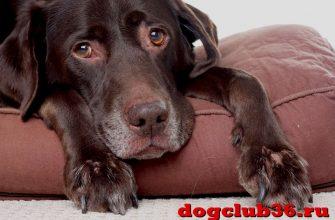 Кожные заболевания и их признаки у собаки