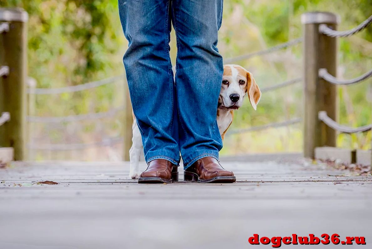 Почему собака не хочет гулять на улице и рвется домой
