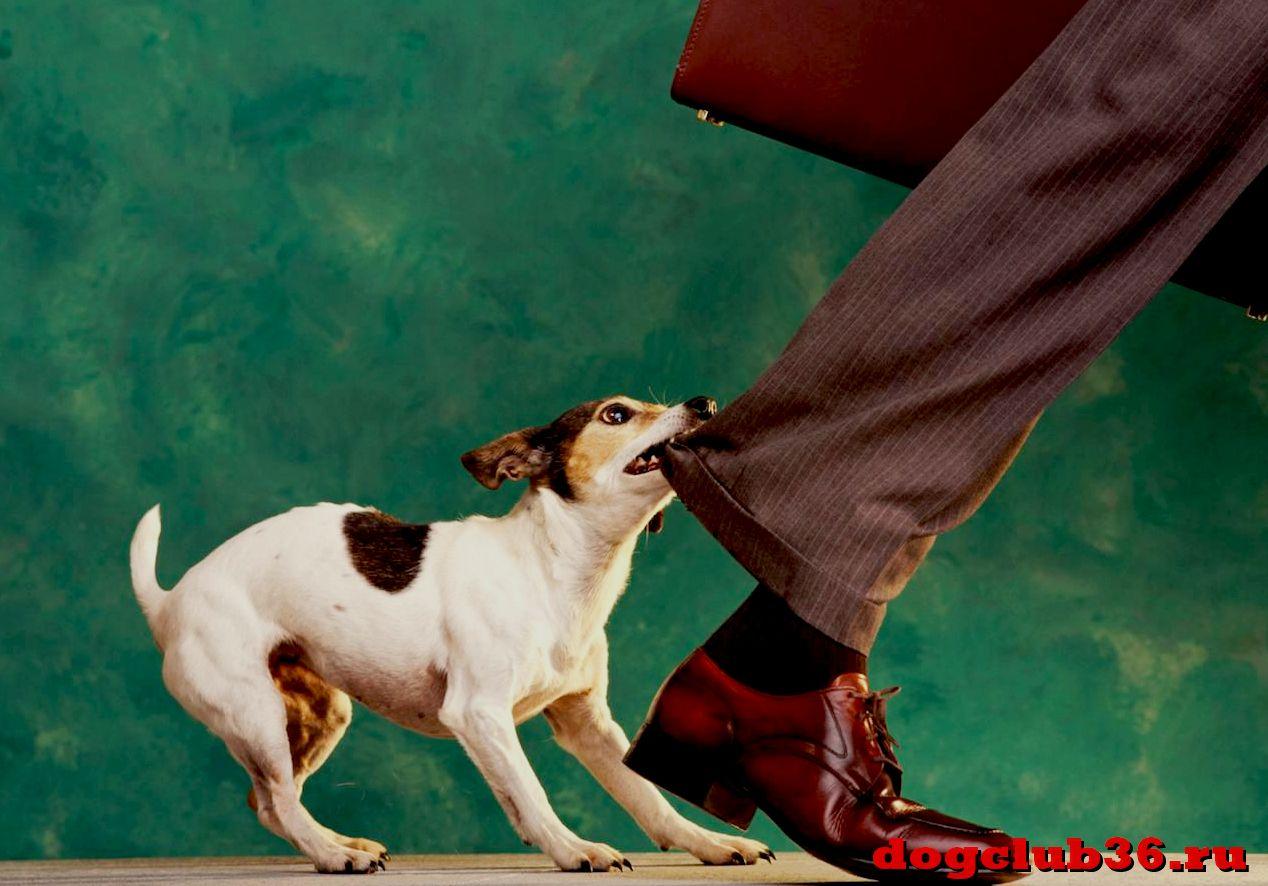 Почему собака резко стала агрессивной
